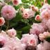 Consolina 700 1 cassetto finitura rosa francese